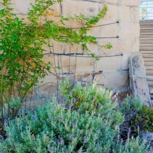Songbird Vivenda Lavender Garden