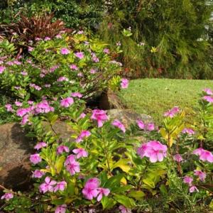 Songbird Vivenda Front Garden